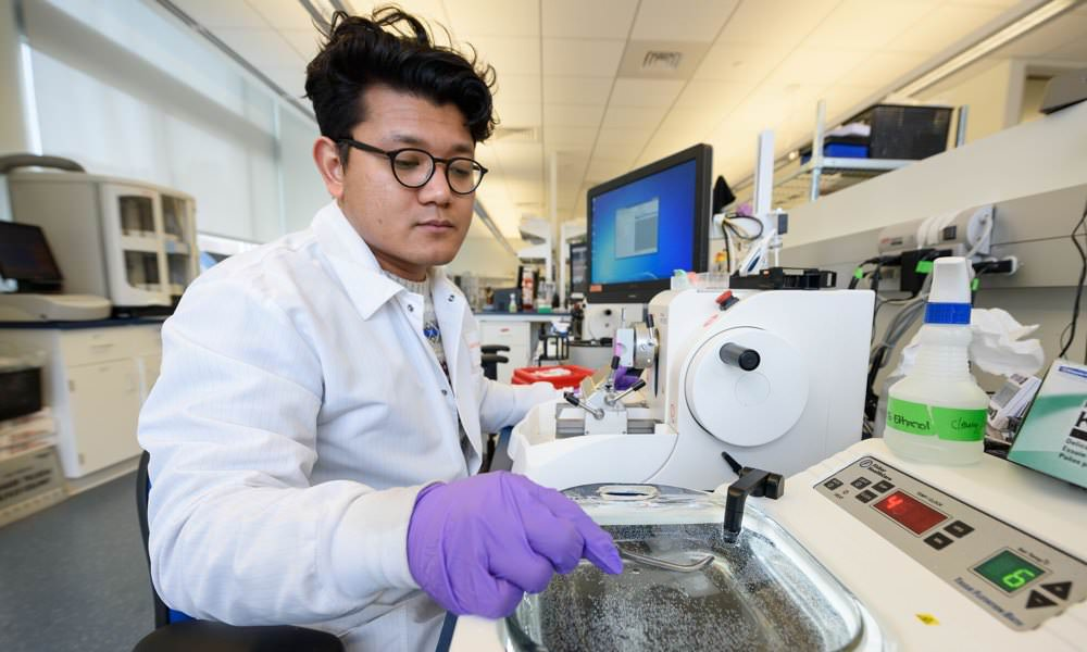 Lab tech places biopsy samples in a water bath