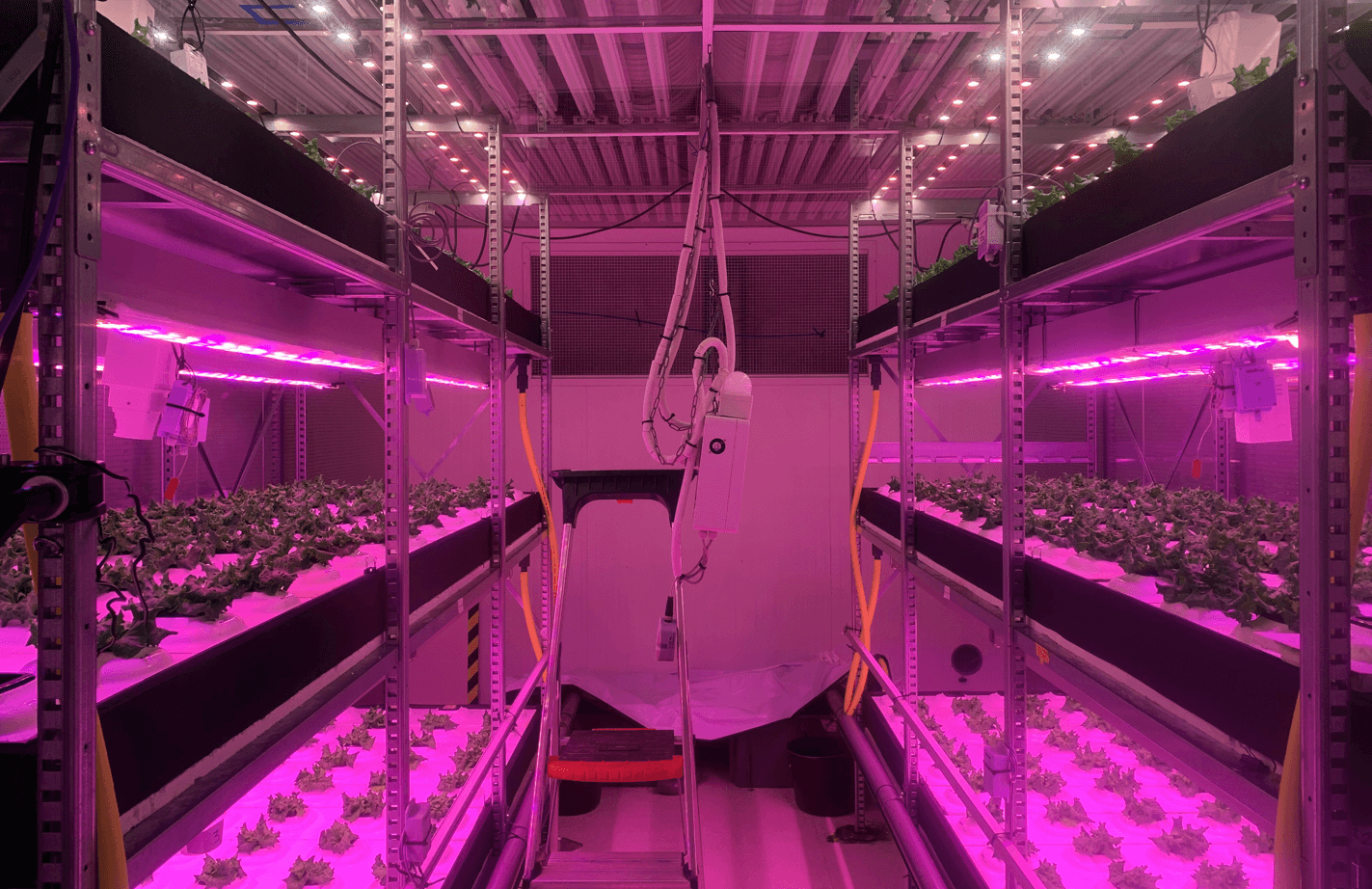 A green room with a weird, purple aura